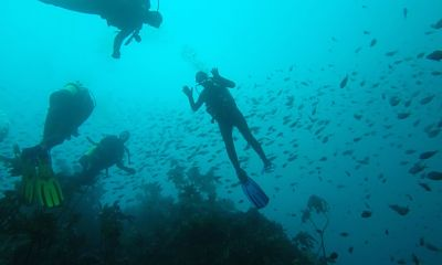 Diving Off the Coast of New Zealand