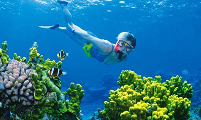 Auckland Snorkeling Tours