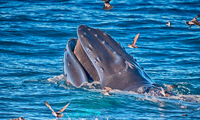 Whale Watching on Your Boat