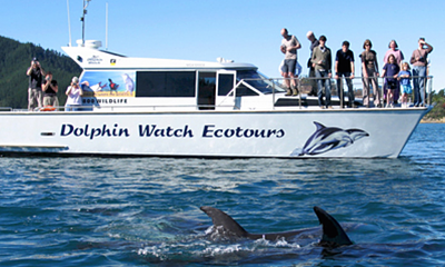 Dolphin Watching in Auckland